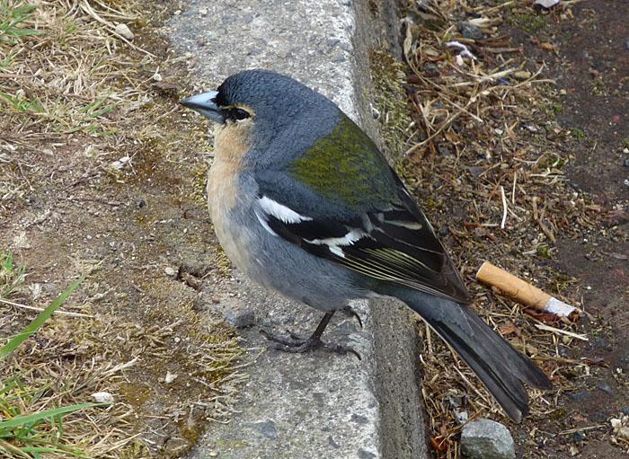 Foto van vogeltje