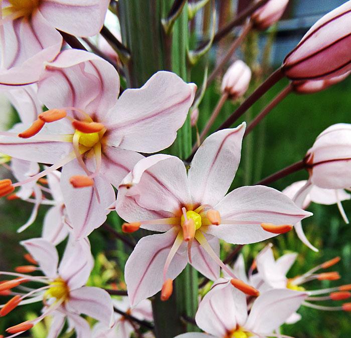 Foto van wit-roze bloemen