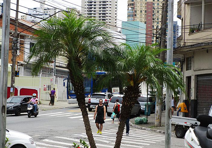 Foto van kruispunt met palmbomen