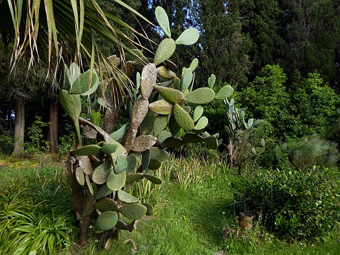 Foto van cactus tussen andere planten en bomen
