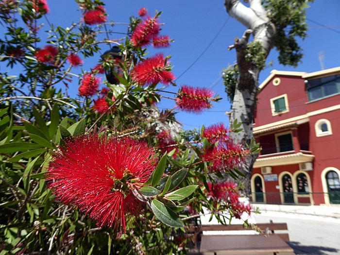 Foto van rode bloem