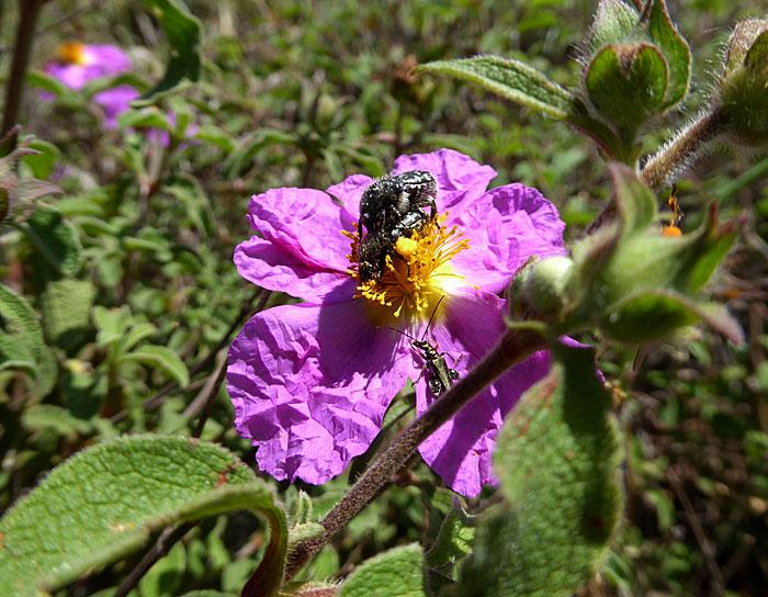 Foto van insecten op bloem